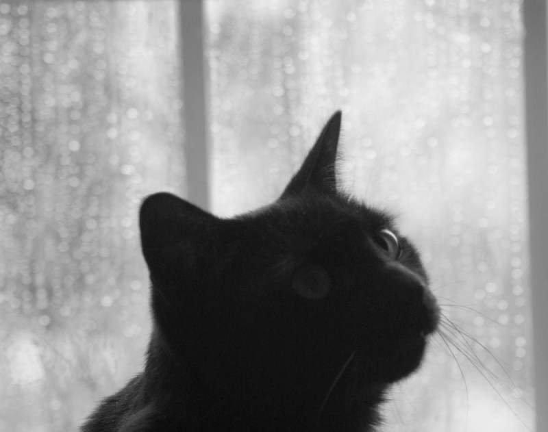 black and white photo of black cat looking out rainy window
