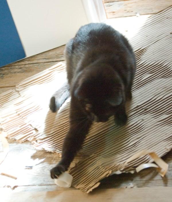 black cat playing