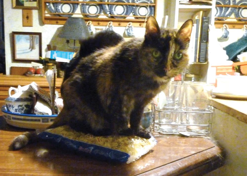tortoiseshell cat on bag of pasta