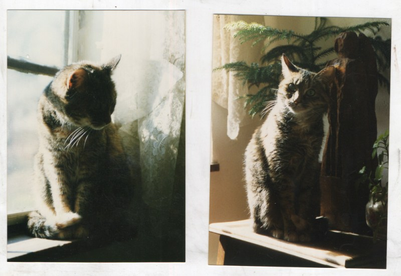 two photos of cat by window