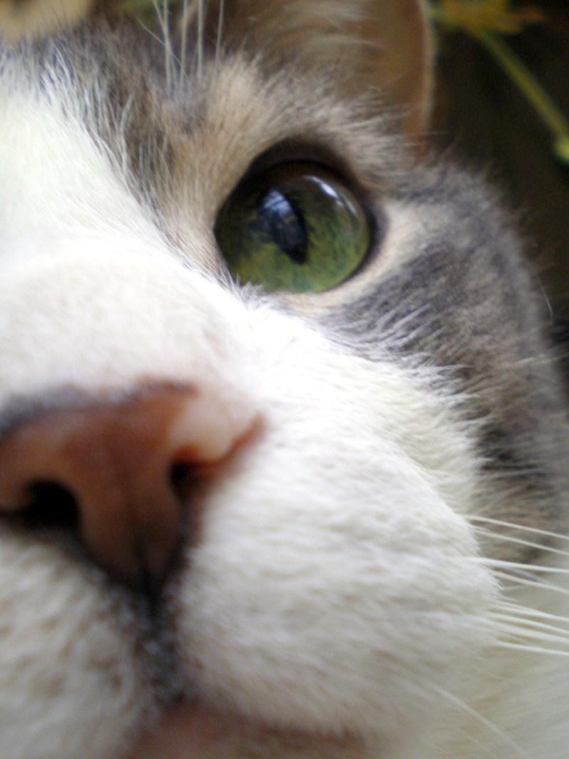 namir's nose close up