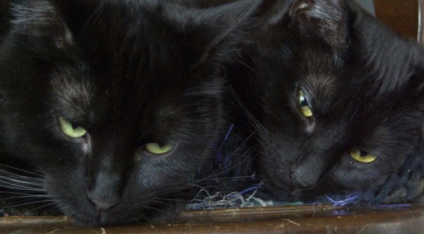 two black cats on chair