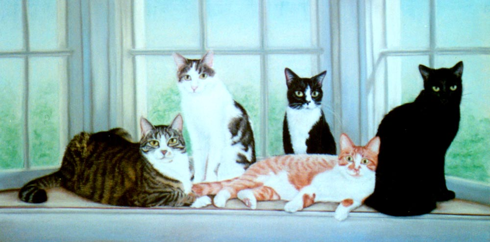 portrait of five cats