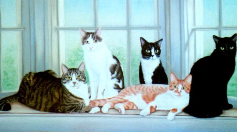 portrait of five cats