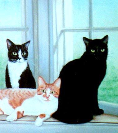 three cats in portrat