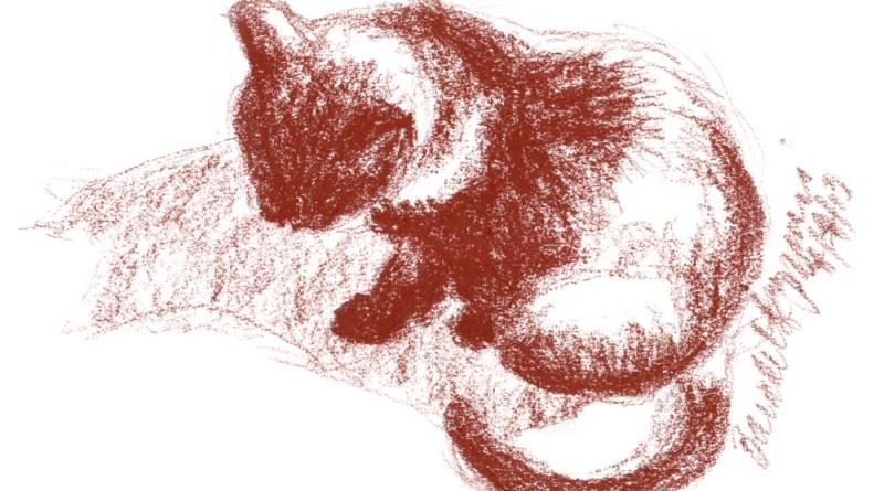 conte sketch of cat in sun