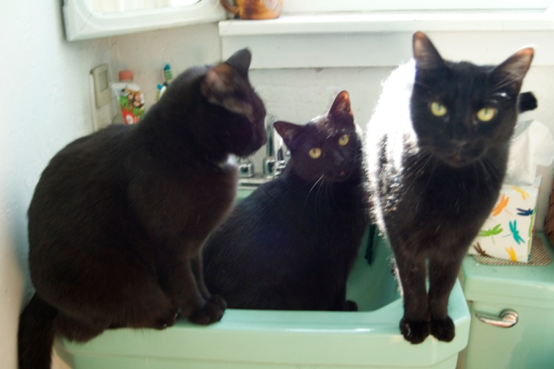 three black cats in green sink
