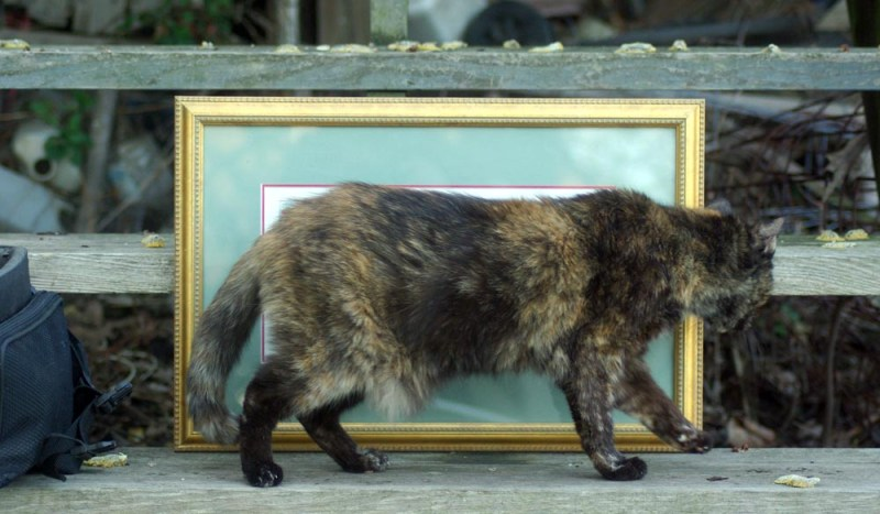 tortoiseshell cat walking in front of painting