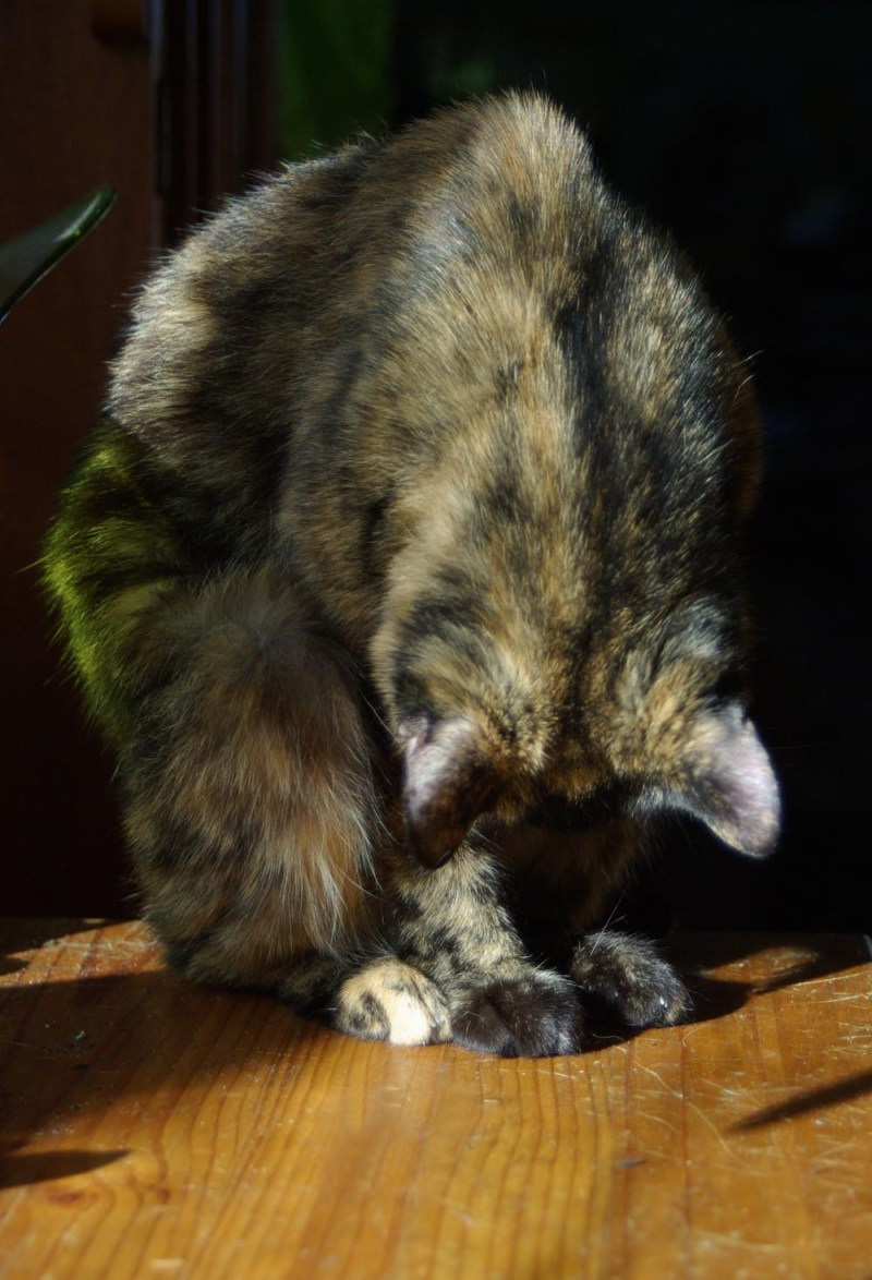 Kelly demonstrates a tortie forward bend.