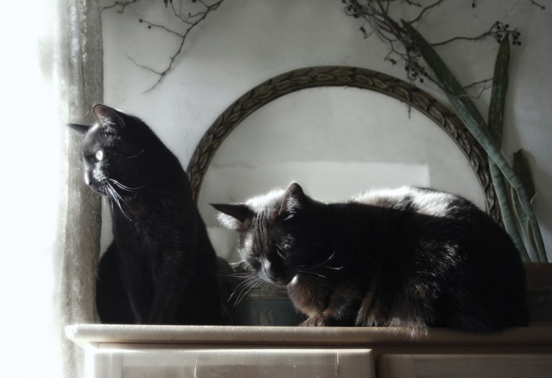 two black cats in sun