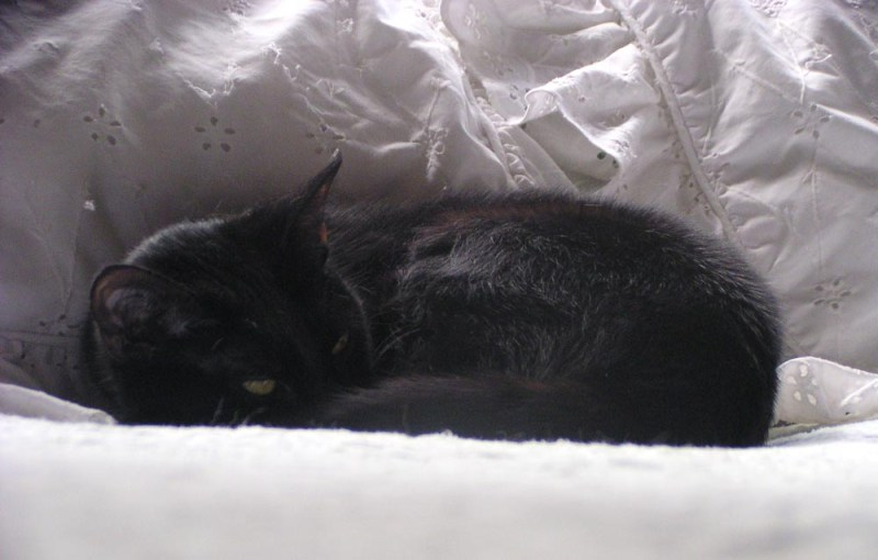 black cat on bed