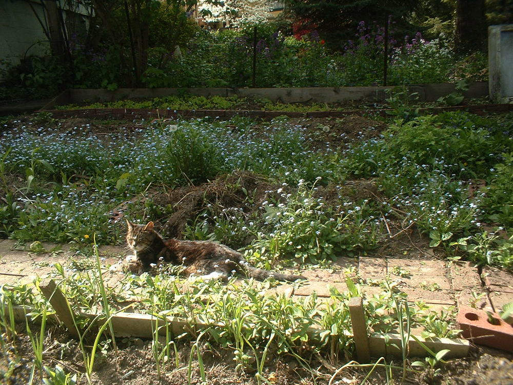 From the Archives: The Old Man in the Garden, Ten Years Ago