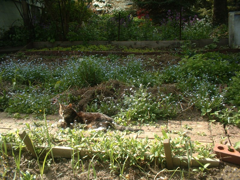 tabby cat in garden