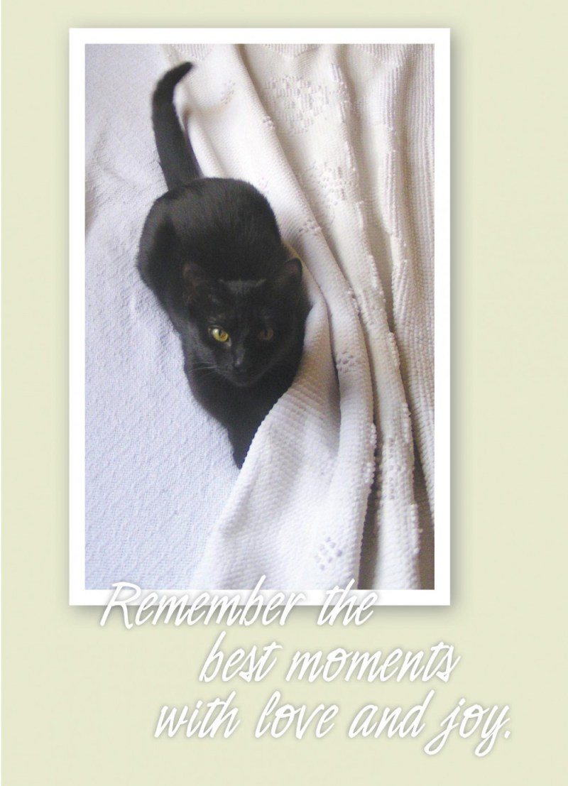 black cat on sympathy card