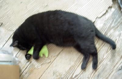 black cat with catnip toy.