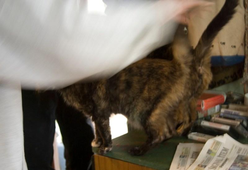 woman petting cats