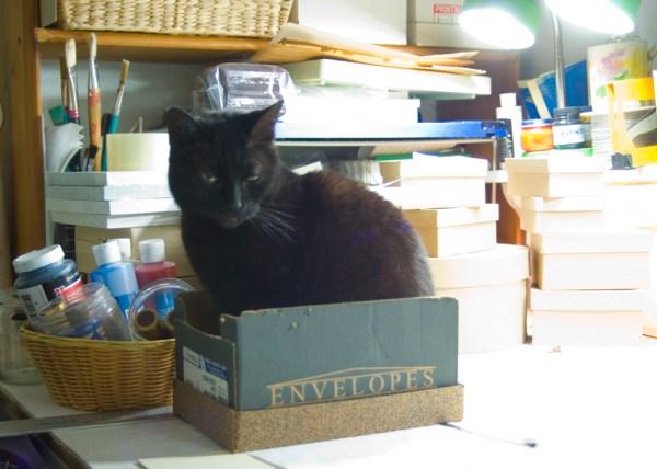 black cat in box with art materials