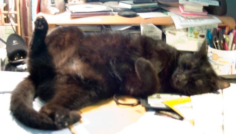 black cat on back on desk.