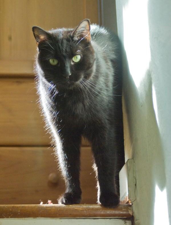 black cat on steps