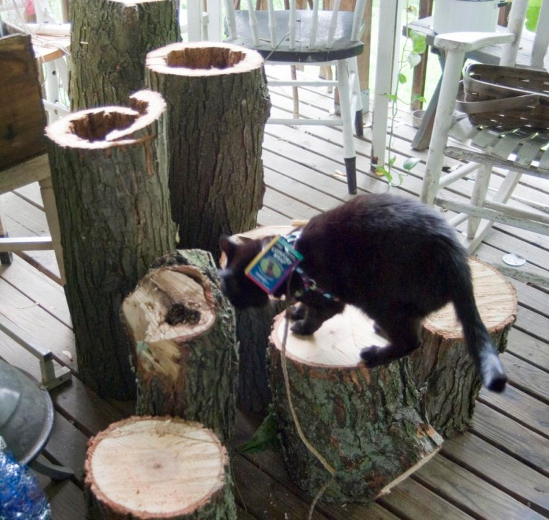 black cat on logs
