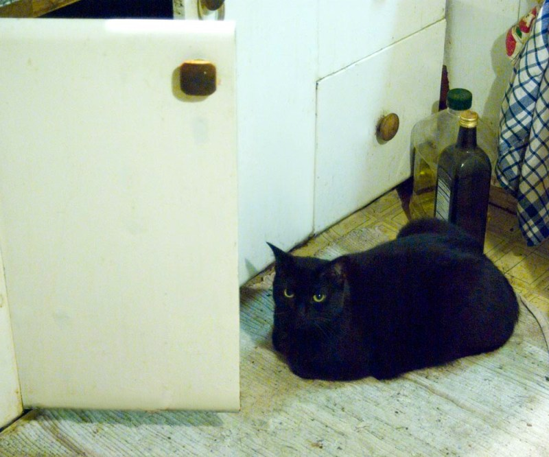 black cat watching cabinet