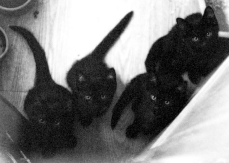four black kittens