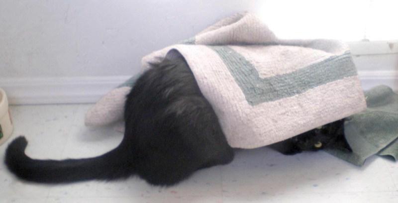 black cat under rug