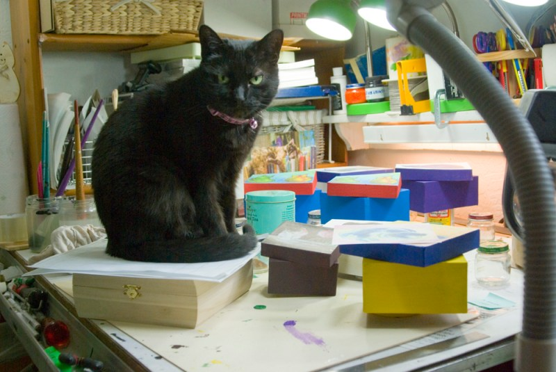black cat with colored boxes
