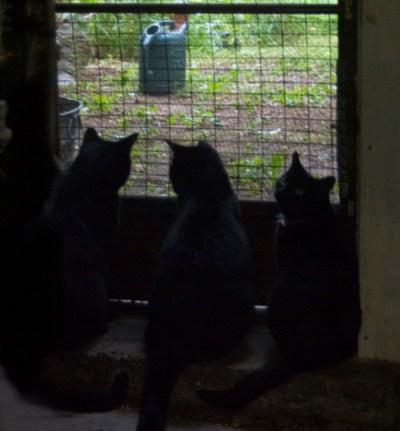 three black cats at door