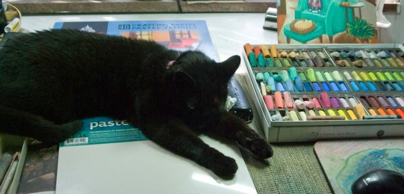 black cat on art table
