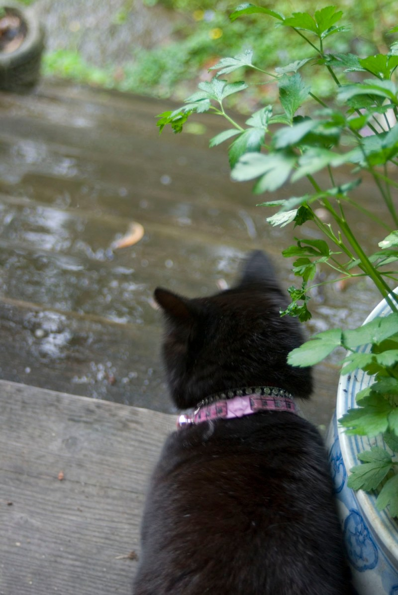 black cat looking at rainy steps.