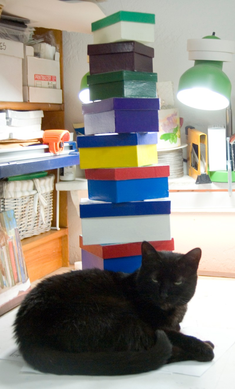 black cat with stack of boxes
