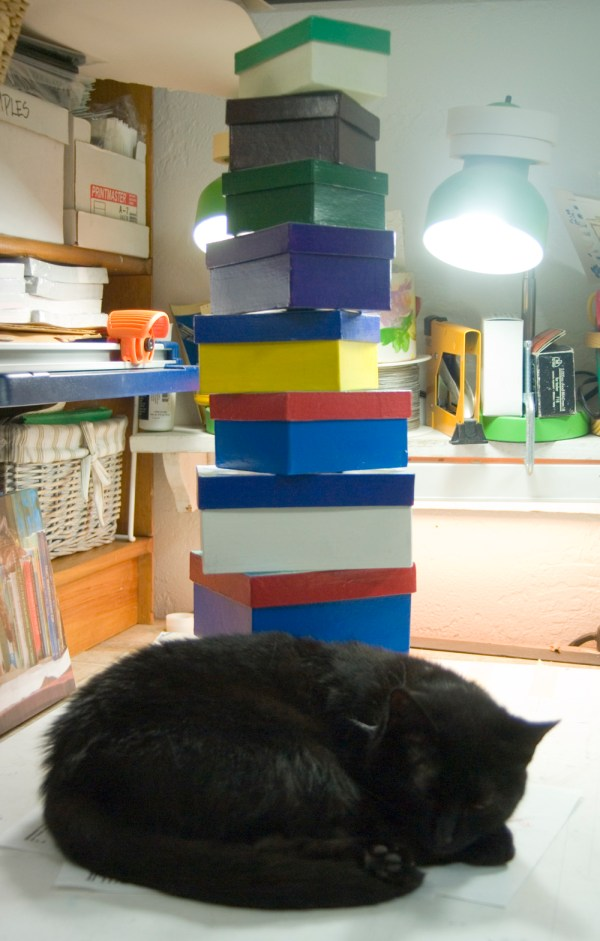 black cat with boxes