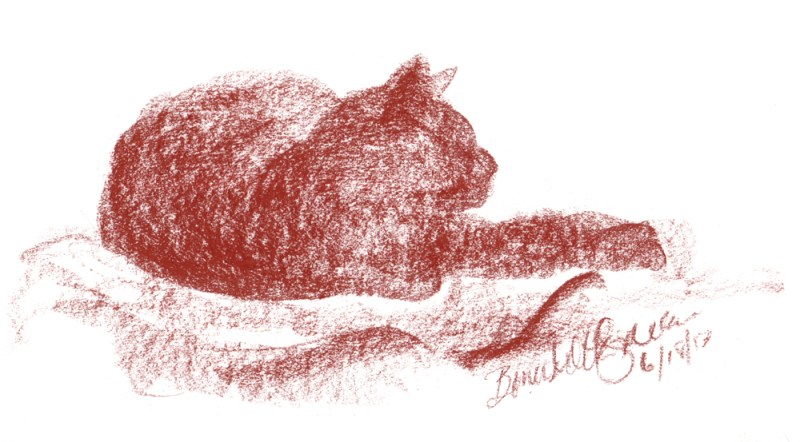 conte sketch of cat