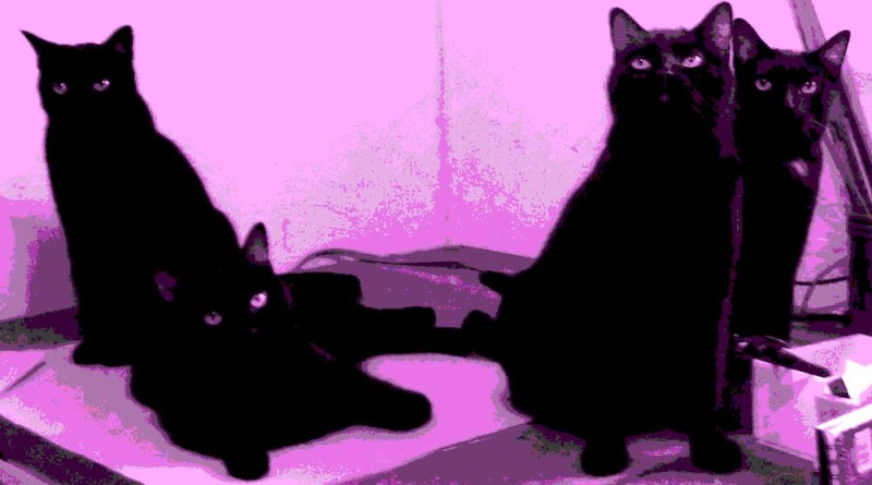 four black cats