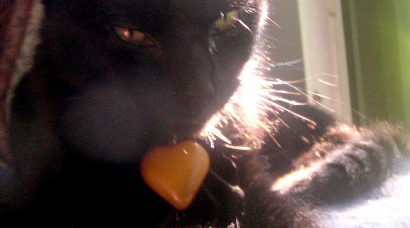black kitten with heart.
