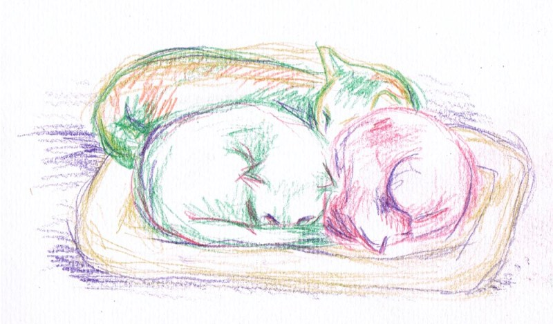"""Colorful Cuddling Kitties"", watercolor pencil (before the water), 5"" x 7"" © B.E. Kazmarski"