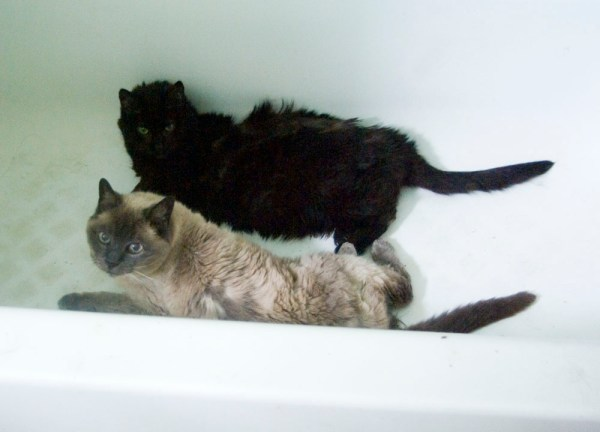 two cats in tub