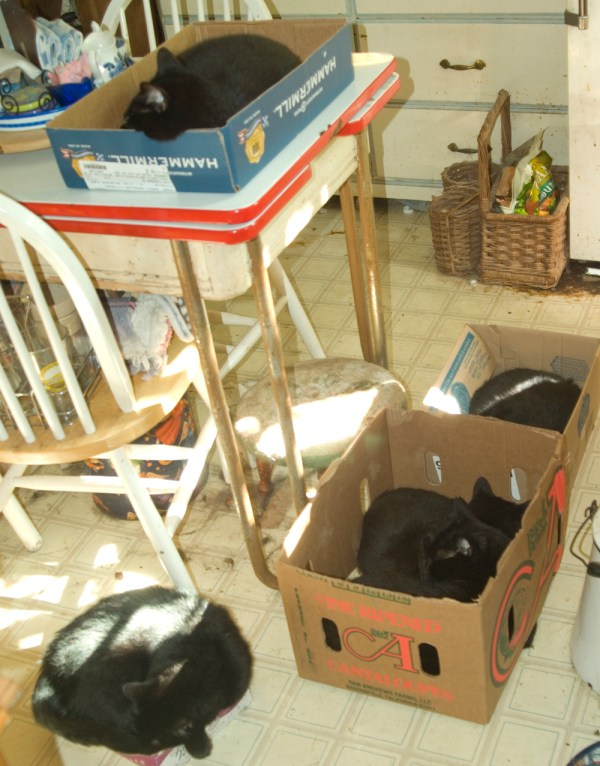 five black cats in boxes