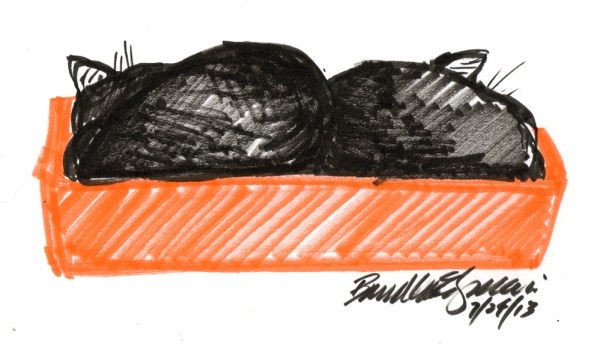 marker sketch of two black cats in an orange box