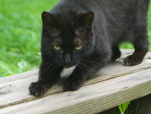 black cat scratching on picnic bench