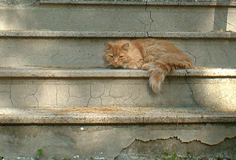 Orange cat on steps