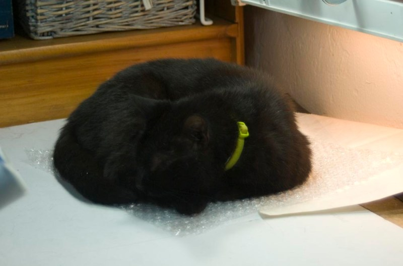 black cat on bubble wrap