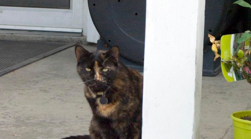 tortie cat by porch post