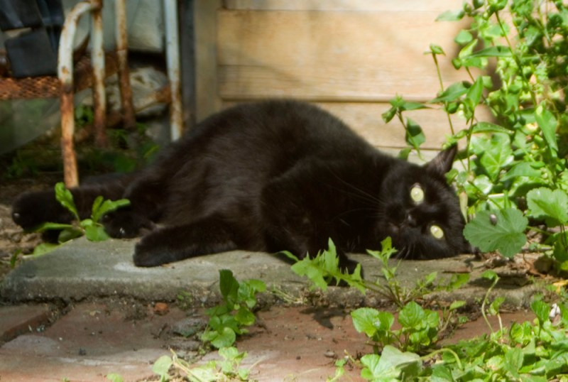 black cat on concrete