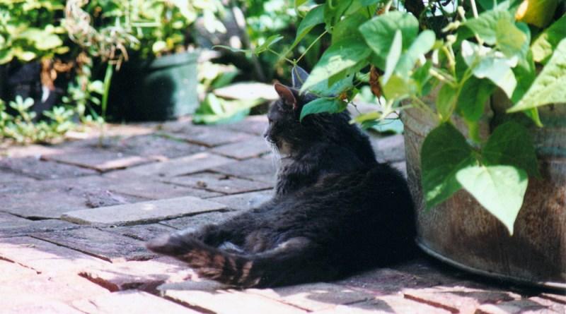 gray cat on red bricks