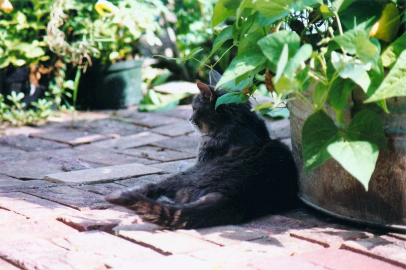 gray cat on red bricks