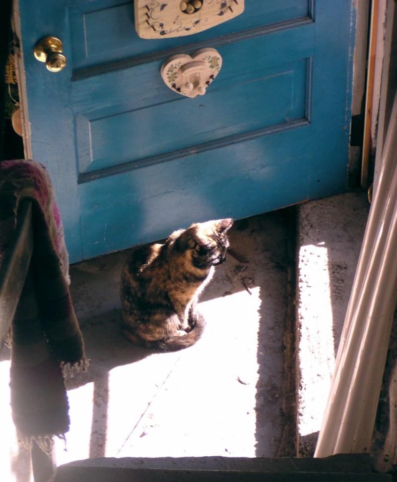 tortoiseshell cat blue door