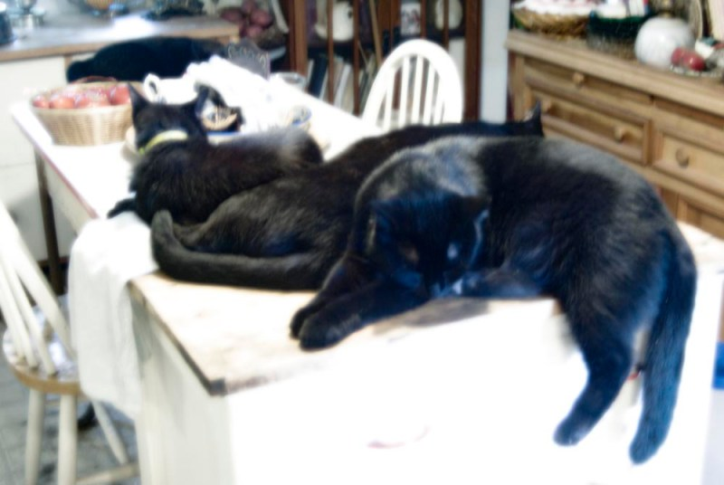 five black cats sleeping in kitchen