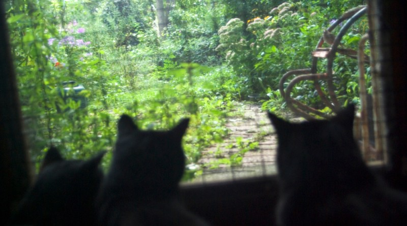 three cat silhouettes